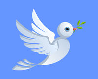 Dove of peace. Flying dove of peace with green twig Royalty Free Stock Image