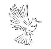 Dove Peace Stock Image