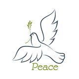 Dove of peace with green olive Royalty Free Stock Photo