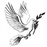 Dove of peace. Ink illustration of a flying white dove with an olive branch vector illustration