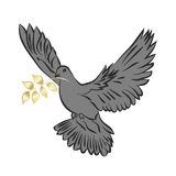 Dove of Peace . Royalty Free Stock Photography