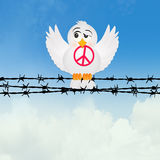 Dove with peace sign on the barbed wire Stock Photo