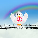 Dove with peace sign on wire Stock Photography