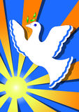 Dove of peace in the sun Royalty Free Stock Image