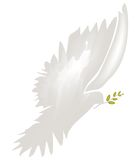Dove of Peace vector Royalty Free Stock Image