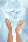 Dove of peace stock illustration
