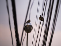 Dove Perched on a Wire After Rain Stock Images