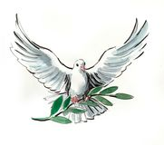 Dove of piece. Watercolor sketch of a withe flying dove with an olive branch vector illustration