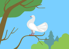 Dove pigeon on tree branch flat cartoon vector wild animal bird. Dove pigeon on tree branch flat design cartoon vector wild animals birds. Flat zoo nature Stock Photo
