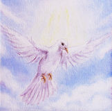 Dove portrait, white radiant holy flying peace symbol, colorful Royalty Free Stock Photo