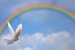 Dove and rainbow. Dove flying towards rainbow in blue sky Stock Image