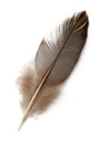 Dove's feather Royalty Free Stock Images