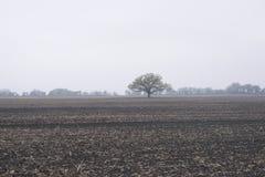 Dove ` s i raccolti della molla? Fotografie Stock Libere da Diritti
