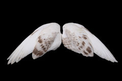 Dove's wings Stock Photos