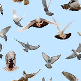 Dove. Seamless texture with flying doves stock illustration