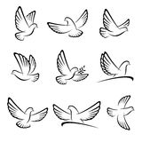 Dove set. Vector Royalty Free Stock Photos