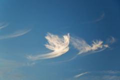 Dove-shaped cloud. Dove shaped cloud in the sky Royalty Free Stock Image