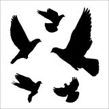 Dove silhouette Stock Images