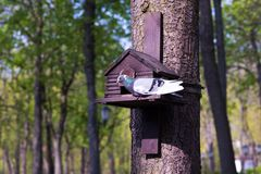 The dove sits on a bird house. The dove is waiting for people to feed it stock photo