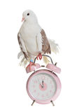 Dove sits on old styled alarm-clock Stock Photo