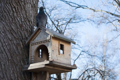 Dove sitting on the bird manger during winter season in park Stock Photo