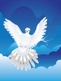 Dove in the Sky Royalty Free Stock Photography