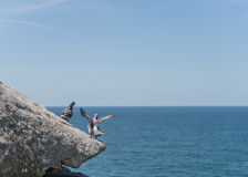 Dove Standing on the edge of rock. Close to Ocean. Sydney, Australia Stock Images