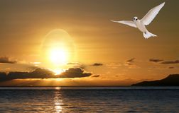 Dove in sunrise. Peace and happiness of Easter