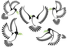 Dove symbol of peace and freedom Royalty Free Stock Images