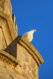 Dove at the tower. Photo of a dove perched high up on tankerton castle towers in kent Stock Images