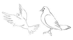 Dove Two options Royalty Free Stock Photos