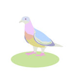 Dove, vector illustration, bird living next to a man Royalty Free Stock Images