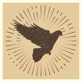 Dove vintage vector pigeon Royalty Free Stock Photography