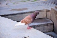 Dove watching. Stock Photos