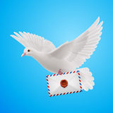 Dove white Stock Photography