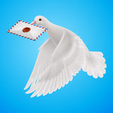 Dove white Stock Photo