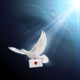 Dove white Stock Image