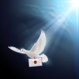 Dove white Stock Image