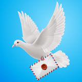 Dove white Royalty Free Stock Image