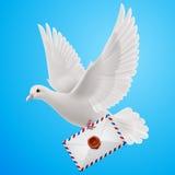 Dove white Royalty Free Stock Image
