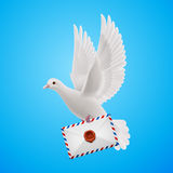 Dove white Royalty Free Stock Photo