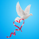 Dove. White dove with red ribbon on the blue background Royalty Free Stock Photography
