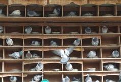 dovecote Foto de archivo libre de regalías