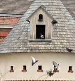 Dovecote Stock Images