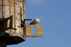 Dovecote (pigeon house) Royalty Free Stock Photo