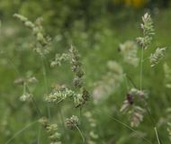 Dovedalepark, Piekdistrict, Engeland - grasrijke weiden royalty-vrije stock fotografie