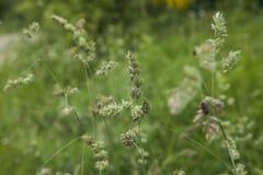 Dovedalepark, Piekdistrict, Engeland - weiden op een zonnige dag royalty-vrije stock afbeelding