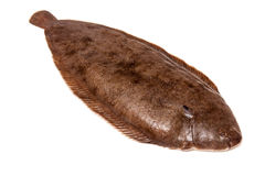 Dover sole fish whole royalty free stock photos