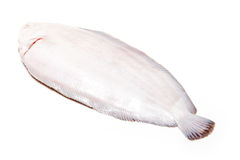 Dover sole fish whole Stock Photo