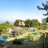 DOVER, UK – Jun 30, 2018: England flag in vegetable garden in late summer. Herbs flowers and vegetables in backyard formal stock image